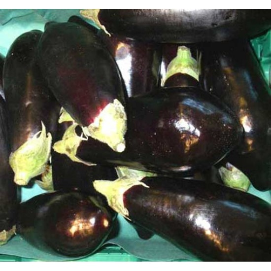 Aubergine / Eggplant - 1000 Seeds - Black Beauty - Solanum Melongena