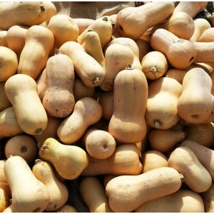 Butternut Squash Waltham - 50 Seeds