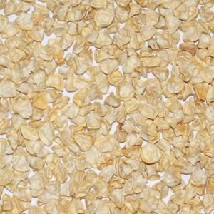 Super Sweet Sweetcorn F1 White Lady - 100 Seeds - Zea Mays var. Saccharata