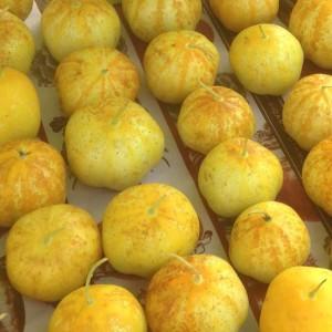 Cucumber 'Lemon' - 50 Seeds - Cucumis sativus - Salad Vegetable