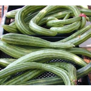 Cucumber Painted Serpent - 30 Seeds - Salad Vegetable