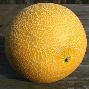 Galia Melon - 100 Seeds - Cucumis Melo