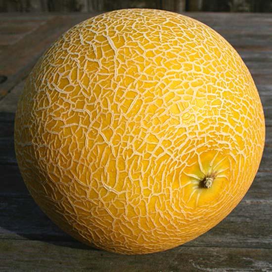Galia Melon - 100 Seeds - Cucumis Melo