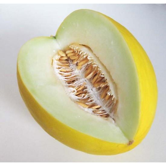 Melon Honeydew - 100 Seeds - Cucumis melo
