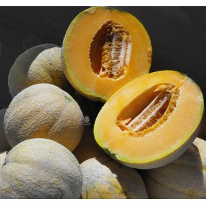 Melon Delicious 51 - 50 Seeds - Cucumis Melo