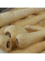 Parsnip - White Gem - 500 Seeds - Great Value! - Pastinaca Sativa