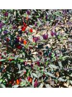 Chili Bellingrath Gardens - 50 Seeds - Pepper Capsicum annuum