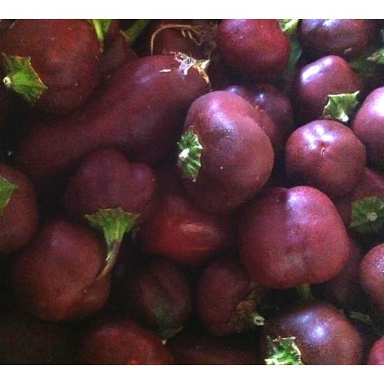 Miniature Chocolate Bell Pepper - 100 Seeds - Capsicum Annuum - Heirloom Variety