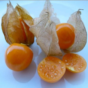 Physalis Peruviana - 100 Seeds - Cape Gooseberry Chinese Lantern