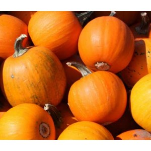 Pumpkin Sugar Pie - 25 Seeds - Pie Pumpkin - Cucurbita Pepo