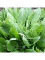 Sorrel De Belville - 1500 Seeds - Rumex Acetosa