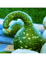 Speckled Swan Squash - 10 Seeds - Cucurbita Pepo