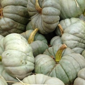 Squash Triamble - 10 Seeds - Curcubita Maxima - Heirloom