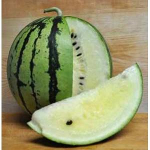 Watermelon Cream of Saskatchewan - 20 Seeds - Heirloom Citrullus Lanatus