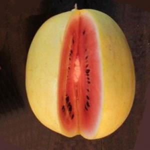 Watermelon Golden Midget  - 20 Seeds - Heirloom Citrullus Lanatus