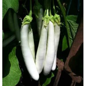 Aubergine Eggplant - 50 Seeds - Finger Fruit White