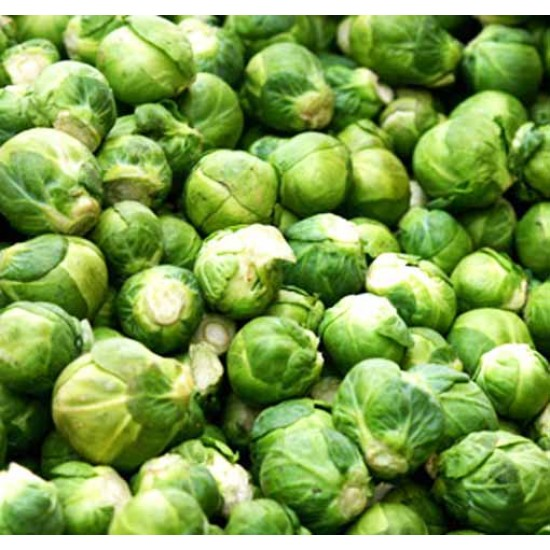 Brussel Sprouts 1000 Seeds - Long Island Improved