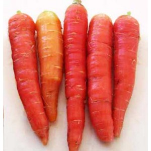 Carrot Atomic Red - 1000 Seeds - Heirloom cultivar