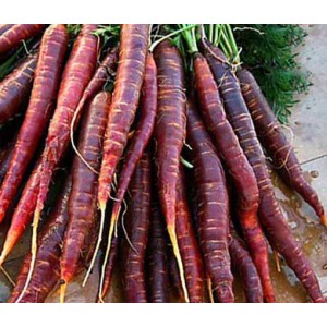 Carrot Cosmic Purple - 500 Seeds - Heirloom cultivar