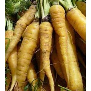 Carrot Solar Yellow - 500 Seeds - Heirloom cultivar