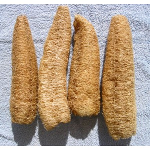 Luffa Aegyptiaca - 15 Seeds - Grow your own Loofa Loofah !!