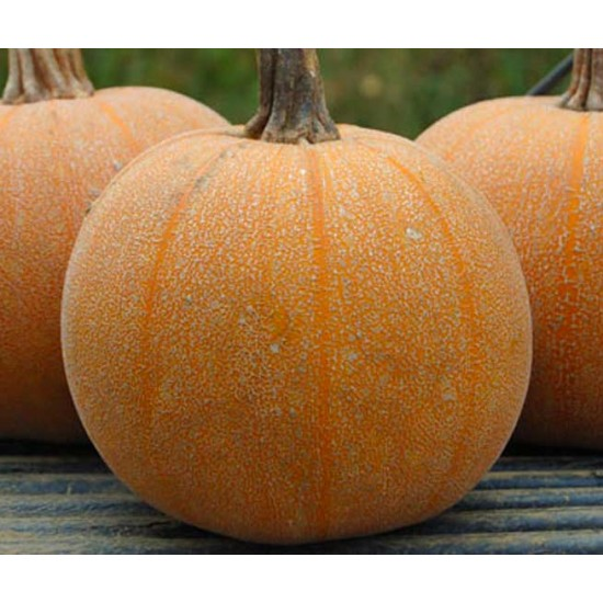 Pumpkin Winter Luxury - 20 Seeds - Curcurbita Pepo Pie Pumpkin
