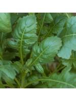Rocket - Scorpion - 5000 Seeds - Diplotaxis Erucoides - Leafy Salad Herb