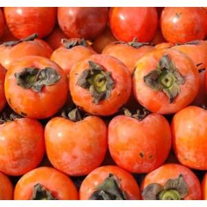 Diospyros Kaki - 10 Seeds - Sharon Fruit / Japanese Persimmon