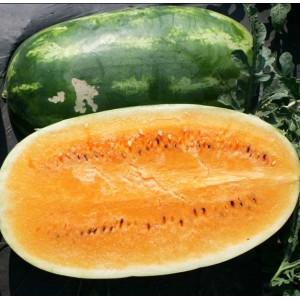 Watermelon Tendersweet Orange - 20 Seeds - Heirloom Citrullus Lanatus