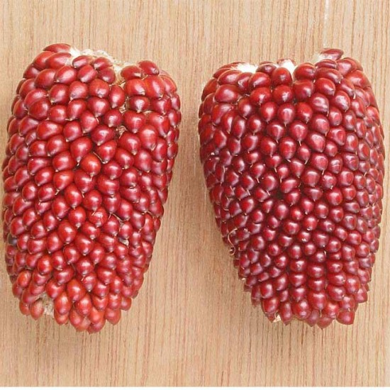 Zea Mays v Gracillima - Strawberry Popping Corn - 100 Seeds - Sweetcorn