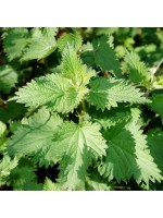 Urtica Dioica - 1000 Seeds - Common Stinging Nettle