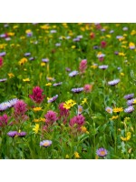 Bee and Butterfly Meadow Mix Seeds - 5g Packs