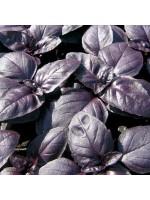 Basil Red Boza - 1000 Seeds - Herb Ocimum Basilicum
