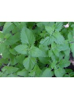Nepeta Cataria - 1000 Seeds - Catnip Catmint Field Balm Catswort