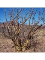 Entandrophragma Caudatum - 5 Seeds - Sprague / Mountain Mahogany