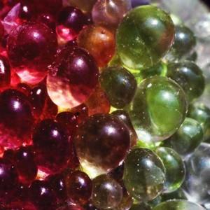 Mesembryanthemum Crystallinum - 100 Seeds - Crystalline Ice Plant